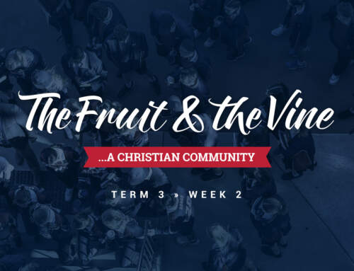 The Fruit & the Vine